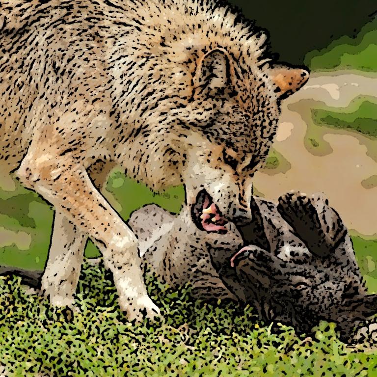 wolf-383928_1280.jpg